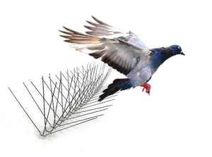 "Bird-X Extra-Wide Stainless Steel Bird Spikes, 10 feet 8"" coverage #1 best seller"