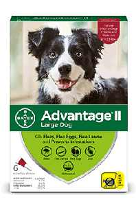 Advantage II Flea Prevention for Large Dogs, 6 Monthly Treatments