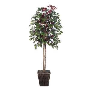Vickerman 6' Artificial Capensia Tree in Square Willow Container