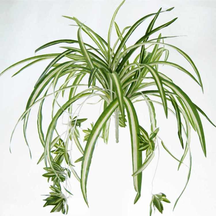 1 Bouquet Large Size Simulatio Chlorophytum Comosumn Plant Wall Decorate Artificial Plant 60Cm