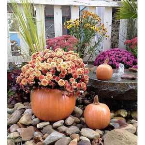 Athena Garden Pumpkin Planter - Set of 3