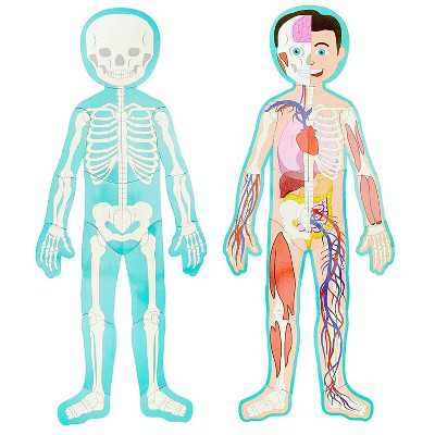 Large Human Body Floor Puzzle, Double-sided Skeleton & Anatomy Jigsaw Puzzles for Kids, Educational & Learning Toys, 3 ft, 17pc