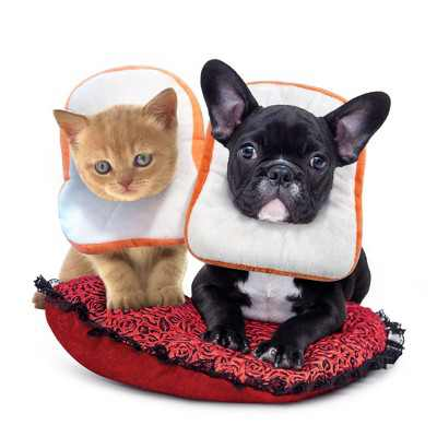 Cat Dog Surgery Recovery Collar, Bread Toast Wound Healing Protective Elizabethan Soft Pet Neck Cone Adjustable (Large, Neck Size 28-34cm)