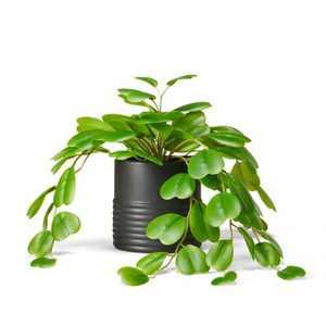 "13"" x 8"" Faux Hoya Kerii Plant in Ribbed Pot Black - Hilton Carter for Target"