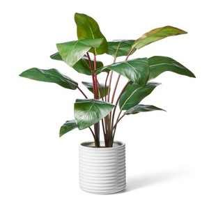 """39"""" x 24"""" Artificial Rojo Congo Plant in Ribbed Ceramic Pot White - Hilton Carter for Target"""