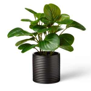 """10"""" x 6"""" Artificial Peperomia Obtusifolia Plant in Ribbed Ceramic Pot Black -  Hilton Carter for Target"""