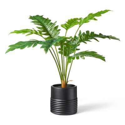 "32"" x 32"" Alocasia Portora Plant in Ribbed Pot Black - Hilton Carter for Target"