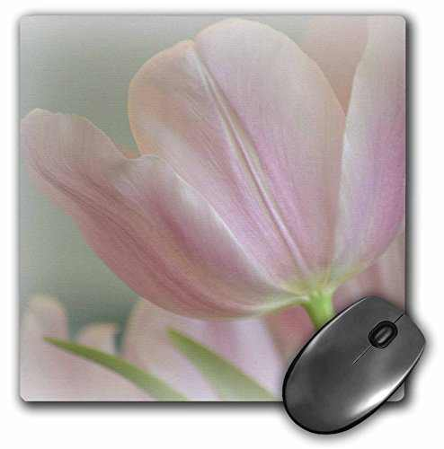 3dRose LLC 8 x 8 x 0.25 Inches Mouse Pad, Candy Pink Tulip (mp_42717_1)