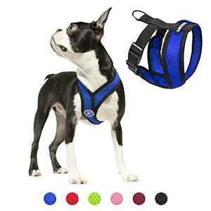 Gooby Dog Harness - Blue, Medium - Comfort X Head-in Small Dog Harness with Patented Choke-Free X Frame - Perfect on The Go No Pull Harness for Small Dogs or Cat Harness