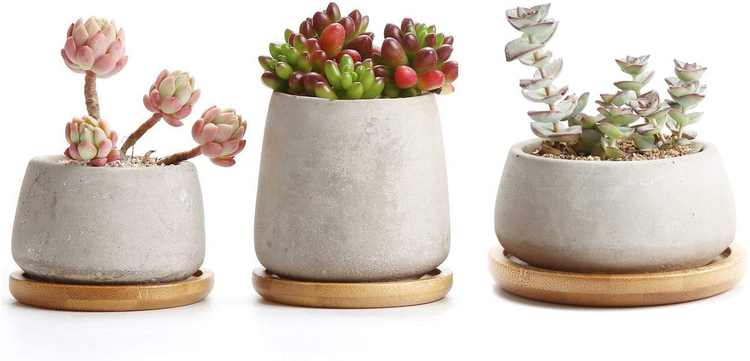 T4U Cement Succulent Plant Pot with Wooden Saucer Set of 3, Grey Cactus Planter Small Bonsai Decorative Container for Home Office Wedding Birthday (No Plants)