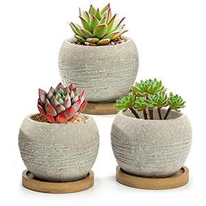 Nattol Succulent Pots, Minimalist 3.5 Inch Gray Cement Succulent Pots Planters with Drainage Hole with Bamboo Saucers, Set of 3