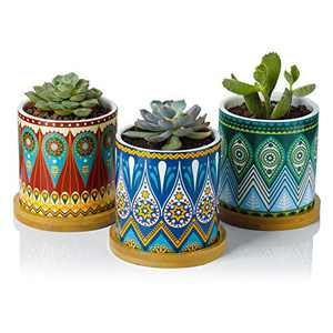 Greenaholics Succulent Planter Pots - 3 Inch Small Ceramic Planters with Bamboo Tray and Drainage Hole, Colorful Mandala Patterns Gifts Set of 3