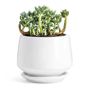 """POTEY Ceramic Plant Pot Flower Planters - 5.9"""" with Drainage Hole Saucer Medium Pots for Indoor Plant - Enough Space - Shiny White"""