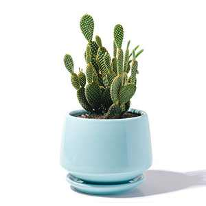 """POTEY Ceramic Plant Pot Flower Planters - 5.9"""" with Drainage Hole Saucer Medium Pots for Indoor Plant - Enough Space - Turquoise"""