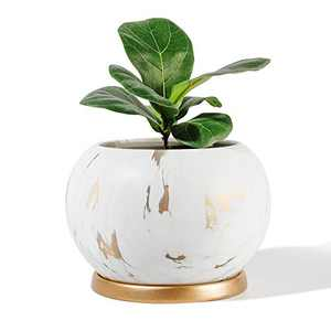 """POTEY Planter Ceramic Plant Flower Pot - 5"""" Large Indoor Glazed Container Bonsai with Drainage Hole Saucer - Large Space , White&Golden"""