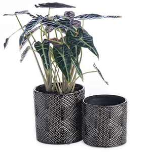 """KYY Ceramic Planters Garden Flower Pots with Drainage Hole 5.7"""" and 4.5"""" Set of 2 Indoor Outdoor Modern Plant Containers(Black Brown)"""