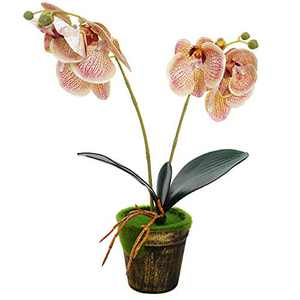 Artificial Orchid Flowers with Vase Real Touch Fake Phalaenopsis Flower Arrangement Vintage Bonsai for Indoor Outdoor Home Office Decoration (Champagne)