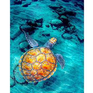 """WISREMT DIY Diamond Painting Kit Full Drill Embroidery Cross Stitch Arts Craft Canvas Wall Home Decor Craft for Adults or Kids 30x40CM (A Turtle, 11.8"""" x 15.7"""")"""