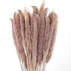 GoMaihe 30pcs Pampas Grass Decoration, 60cm Natural Dried Flowers for Vases, Bouquet Boho Decoration Home Bedroom Living Room Balcony Wedding Photographing Table Decoration
