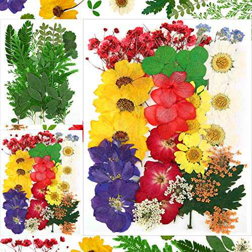 Nuanchu 93 Pieces Real Dried Pressed Flowers Leaves Mixed Natural Pressed Flowers Colorful Daisy Leaves for DIY Scrapbooking Resin Jewelry Nail Art Floral Decorations, 19 Styles
