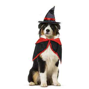 WODISON 2 PCS Funny Dog Cat Vampire Halloween Costumes for Small Cat Dog with Cow Demon King Hat and Cape