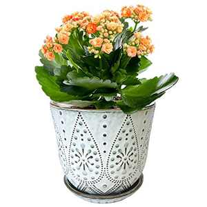 Gepege Ceramic Orchid Pot with Drainage Hole and Saucer for Plants, Large Round Indoor Succulent Planter Flower Pot, 6 Inch (Smoked White)