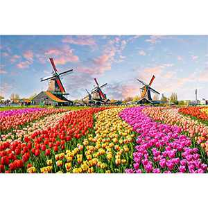 Puzzles for Adults 500 Piece Jigsaw Puzzles 500 Pieces for Adults Kids Teens Christmas Jigsaw Puzzle Game Toys Gift Dutch Windmill Tulip Garden Keukenhof Park