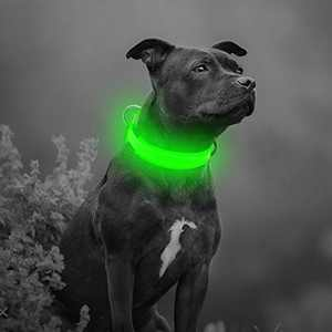 BSEEN LED Dog Collar Light - USB Rechargeable Glow in The Dark Nylon Puppy Collar, Light Up Pet Collars for Night Walking (Small Collar [15-18.9inch/38-48cm], Neon Green)