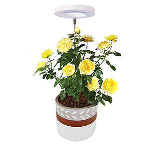 Plant Grow Light,Yadoker LED Growing Light Full Spectrum for Indoor Plants,Height Adjustable, Automatic Timer, 5V Low Safe Voltage,Idea for Small Plant Light