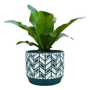 Blomelf Cement Planter Pot Indoor - 5.3 Inch Medium Flower Plant Pots with Drainage Hole Unglazed, Green