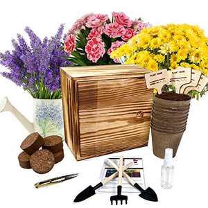 Hand-Mart 4 Flower Seeds Starter Complete Kit Indoors Chrysanthemum Mint Lavender Carnation, Including Soil, Pots, Tools, Pruner, Sprayer, Plant Labels, Wood Box, DIY Craft Gift for Kids Adults.