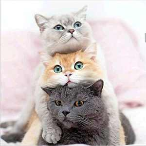 Animal Diamond Painting Kits for Adults, 5d Diamonds Art with Full Tools Accessories, Three Kittens DIY Arts Dotz Craft for Home Décor, Ideal Gift for Family or Self Use