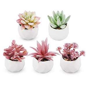 Funarty Artificial Succulent Plants Mini Fake Succulent in Pot Small Fake Plants for Home Decor Set of 5