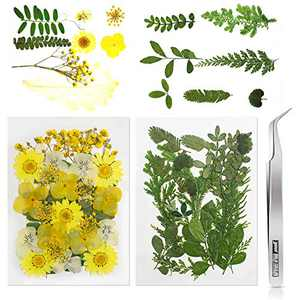 56 Pieces Pressed Dried Flowers for Resin Natural Dried Flowers & Leaves Daisy with Tweezers for DIY Candle Bracelet Making Kit Nail Pendant Crafts Art Floral Decoration