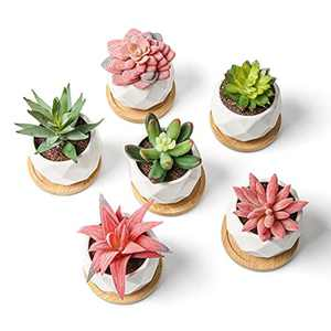 6pcs Artificial Plants Indoors in Pots, EIVOTOR Mini Ceramic Fake Plants for House Office Desk Bedroom Decor Gift Set, Colourful Artificial Plants with 6 Small Wooden Support