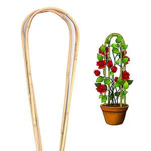 Cambaverd Natural Bamboo Plant Trellis U-Hoop 4 Feet Bamboo Trellis Support for Vines Hoya Plants Ivy Plants Monstera Climbing Flowers Plant Tower - Pack of 3 Hoops