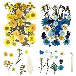 JIAYIQI 74 PCS Real Dried Pressed Flowers Assorted Colorful Daisies Leaves Hydrangeas Natural Dry Flowers for DIY Resin Jewelry Art Floral Decors