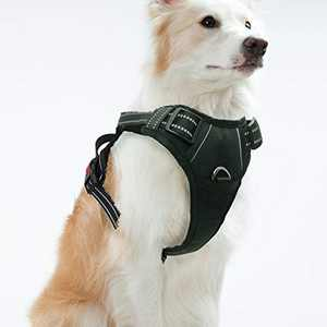 Dog Harness No Pull Reflective: Adjustable Pet Puppy Harness with 2 Leash Clips Comfortable Padded Dog Vest, Easy Control Handle for Small Medium Large Dogs Training, Outdoor Running Walking,Large