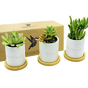 Gratitude Love Abundance Ceramic Pots - 3.5 inch White Mini Succulent Cactus Planter Pot w/ Bamboo Tray & Drainage Hole - GreenMind Design Laser Engraved Set - Home - Gift - Plants not Included