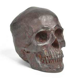 Skull-Decor Halloween-Decorations Human Head-Sculpture Life-Size - Home Party Statue 6.7L x 4.5W x 5.6H Newman House Studio