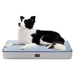 Bedsure Large Orthopedic Dog Bed for Large Dogs - Big Memory Foam Dog Beds, 2-Layer Thick Pet Bed with Removable Washable Cover and Waterproof Lining (36x27x3.5 Inches), Light Blue