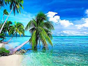 Nature Diamond Painting Kits for Adults, 5D Crystal Diamonds Art with Accessories Tools, Palm Tree Beach Picture DIY Art Dotz Craft for Home Décor, Ideal Gift or Self Painting