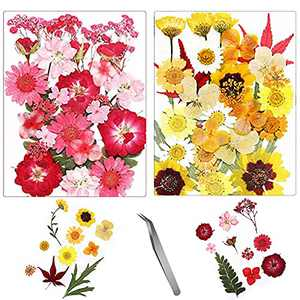 60PCS Natural Dried Pressed Flowers for Crafts, Multiple Colorful Real Dry Flower with Tweezers for Scrapbooking, Epoxy Resin, Candle, Soap Making, DIY Art Crafts, Painting
