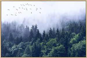 Mignombre Framed Canvas Wall Art for Living Room Bedroom - Nordic Style Natural Landscape Foggy Forest - HD Color Prints Paintings Artwork for Modern/Rustic Home Office Decorations Ready to Hanging (16'' x 24'' , K002)