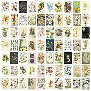 Vintage Botanical Room Decor Aesthetic Pictures Wall Collage Kit, Vintage Illustration Tarot Posters for Room Aesthetic, Cottagecore Wall Decor for Bedroom Dorm Aesthetic, Botanical Wall Art Prints ,Trendy Room Decor Vintage Posters for Teens Boys Girls, 70PCS